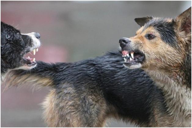 В Москве обнаружен обглоданный собаками мужской труп