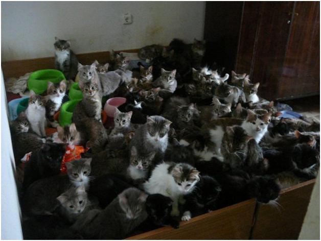 Москвичка расплодила в своей квартире 130 кошек