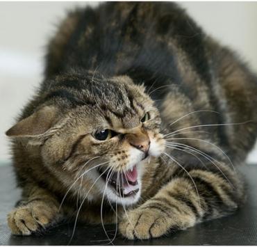 В Москве кошка изувечила шестилетнего ребёнка
