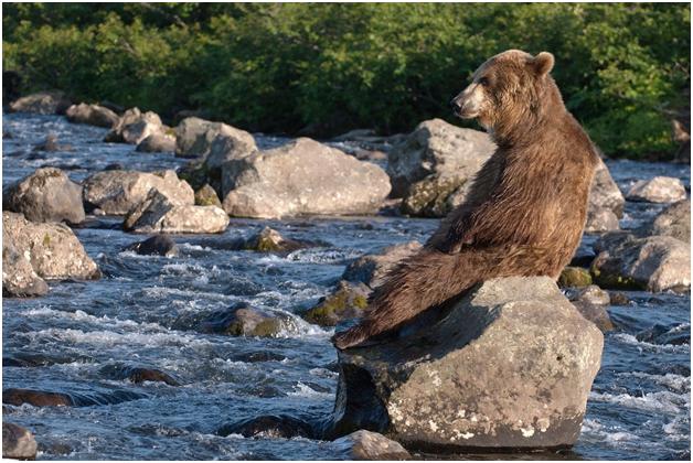 На Камчатке медведь задрал жительницу Москвы