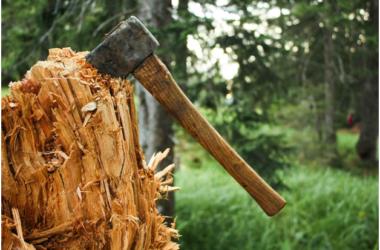 Заслуженного врача России убило срубленное им дерево