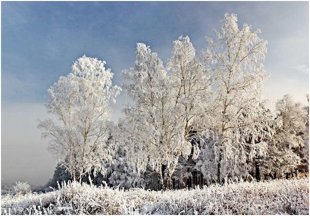 Морозко: жительница Москвы пыталась умерщвить троих своих детей, оставив их голыми на морозе в лесополосе