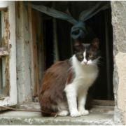 Под Москвой обнаружили девочку-кошку